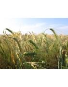 Alimentación natural-bio